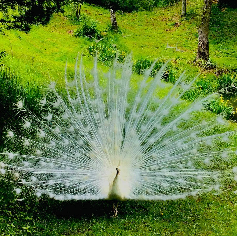A Spiritual Paradise❤️🙏!!! New Vrindaban, WV