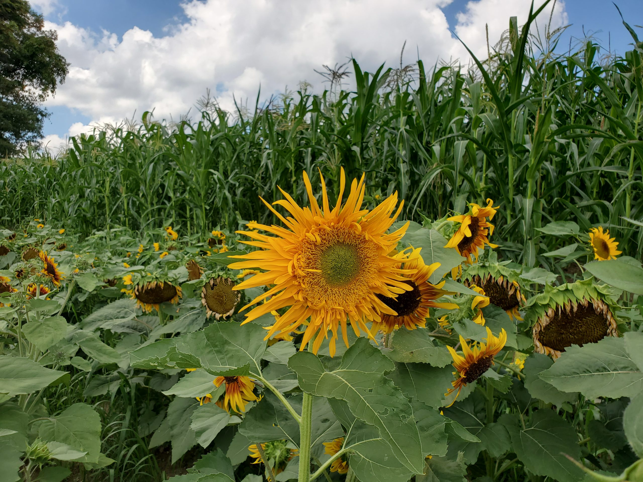 Flower lover's Paradise- Simmons Farm, PA💕🦋