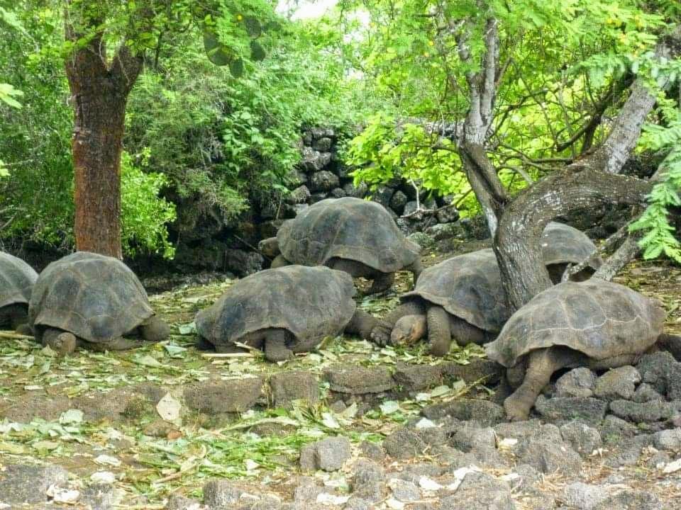 Galapagos Island and its beautiful island called Santa Cruz