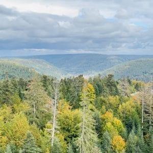Über den Wipfeln der Schwarzwaldtannen-thumbnail