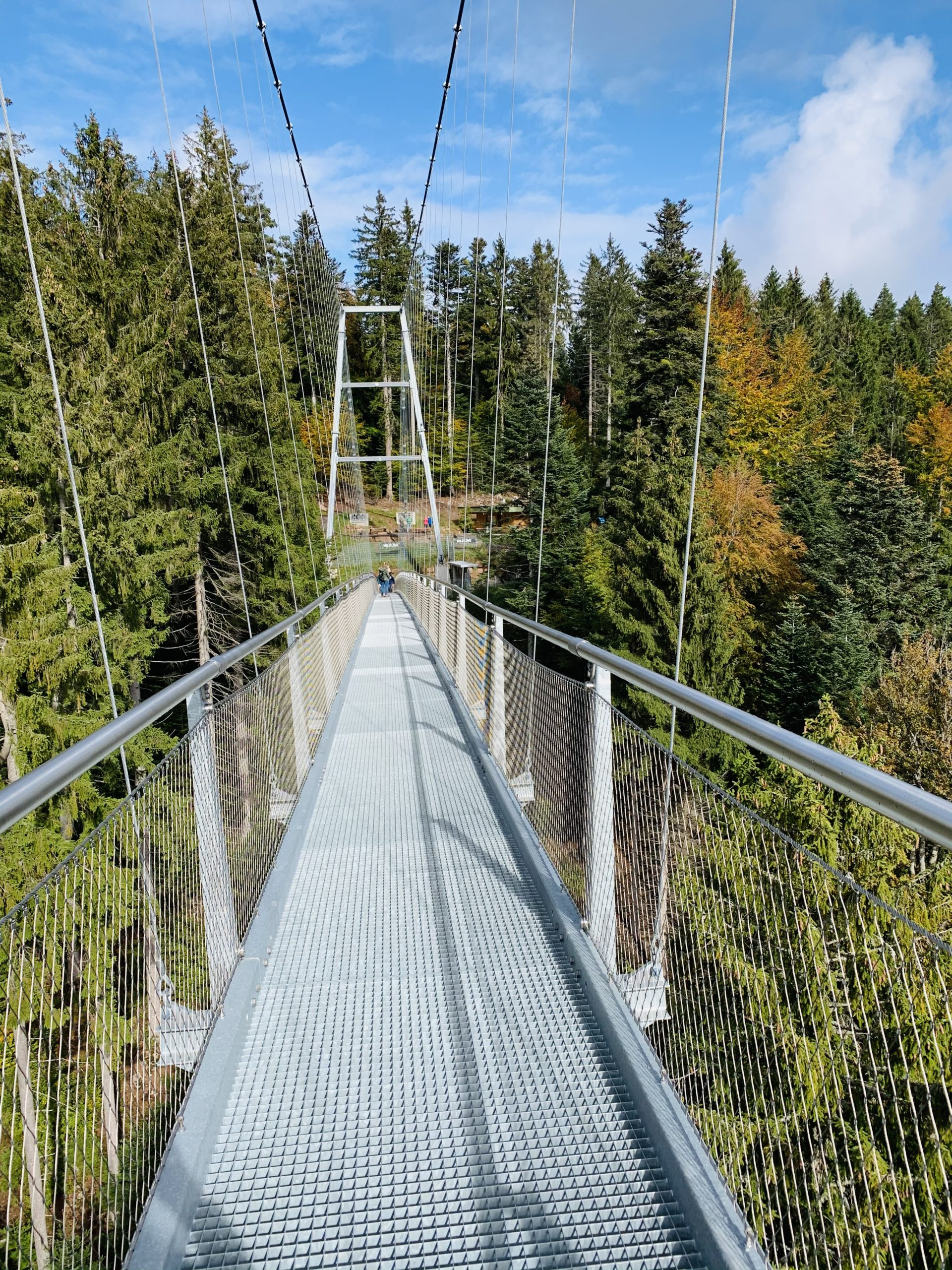 Über den Wipfeln der Schwarzwaldtannen
