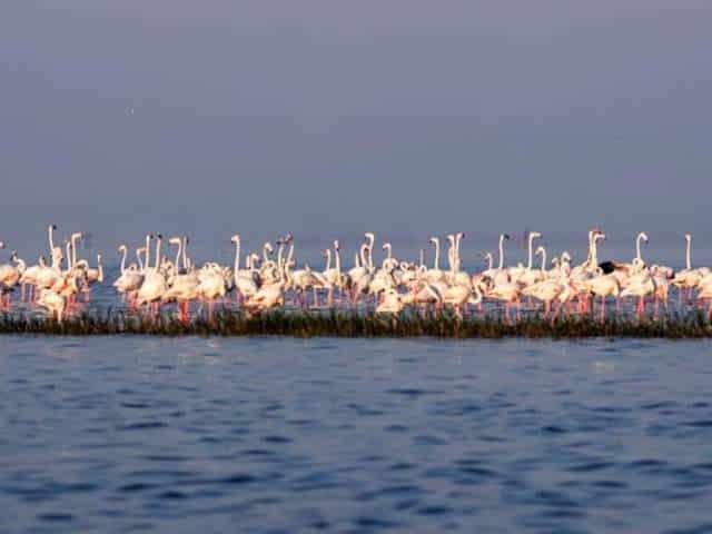 Bhigwan Bird Watching – The Flamingo World