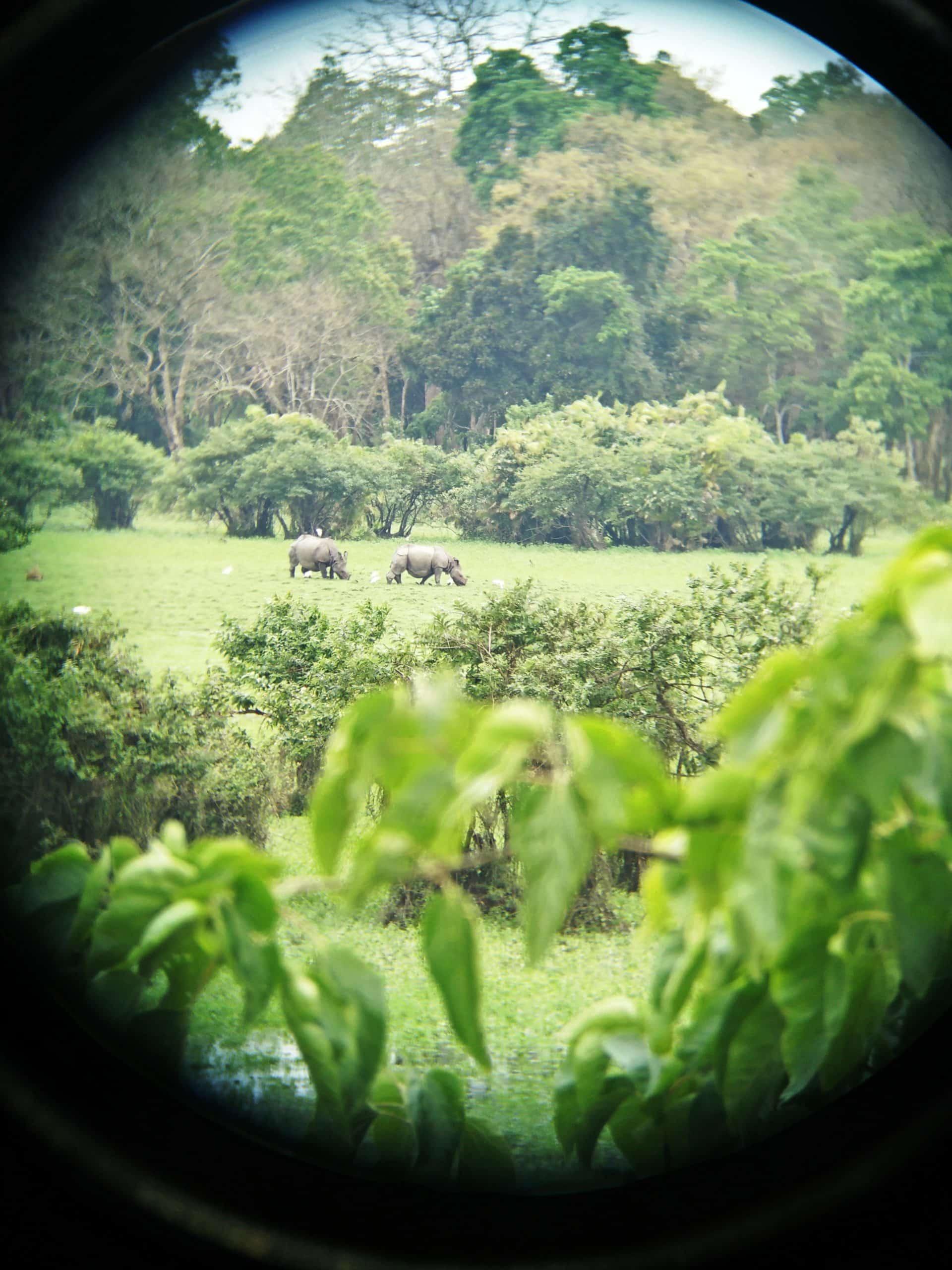 Kaziranga National Park – A Meet with Animals