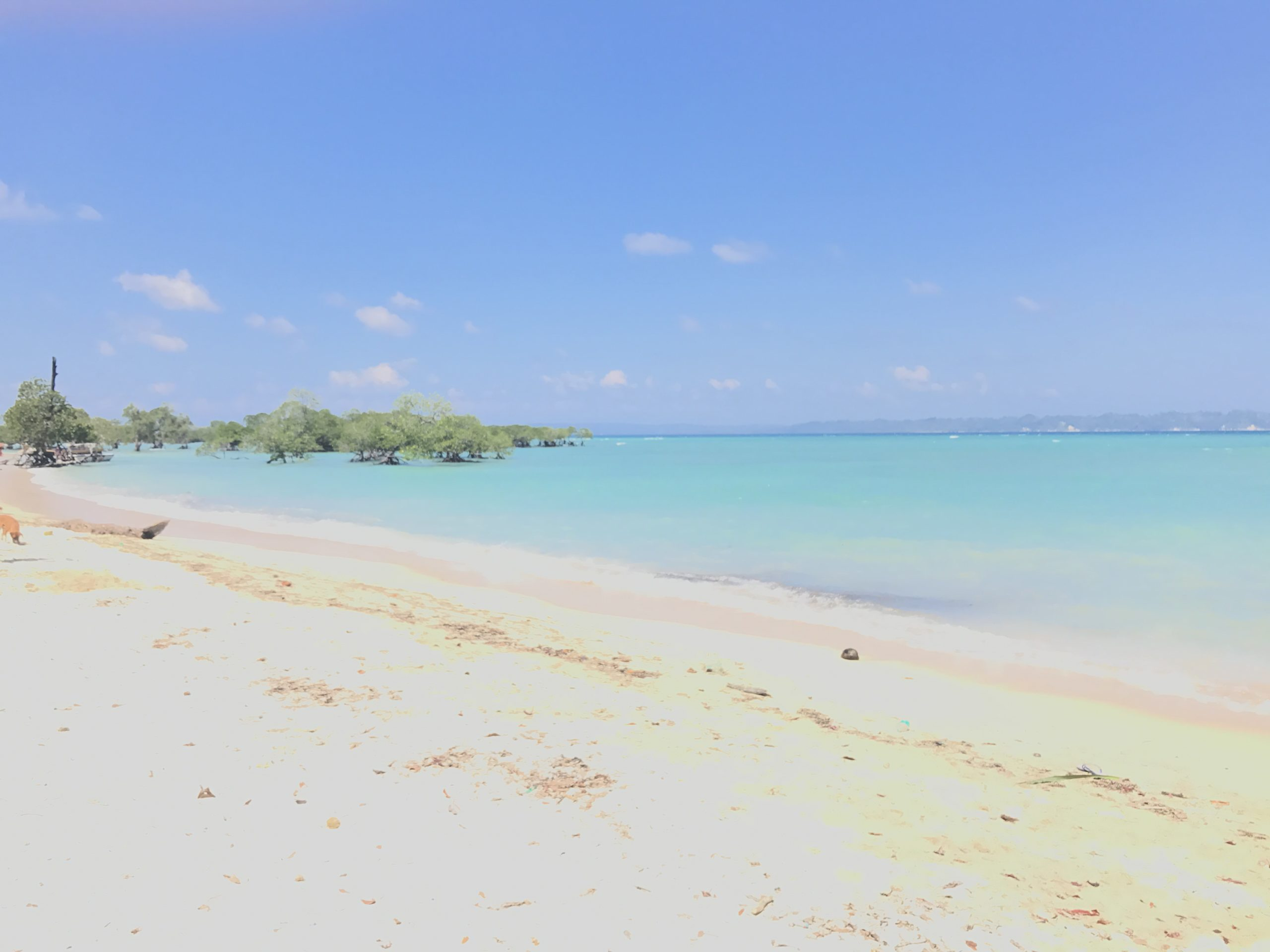 NEIL ISLAND 🏝