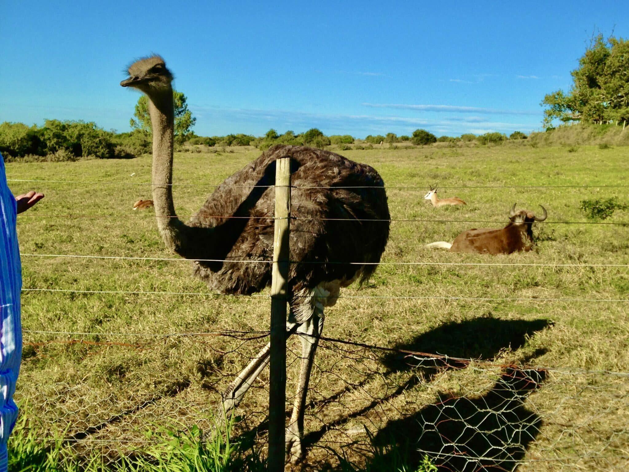 Exploring Kwantu Private Game Reserve (Part 2)
