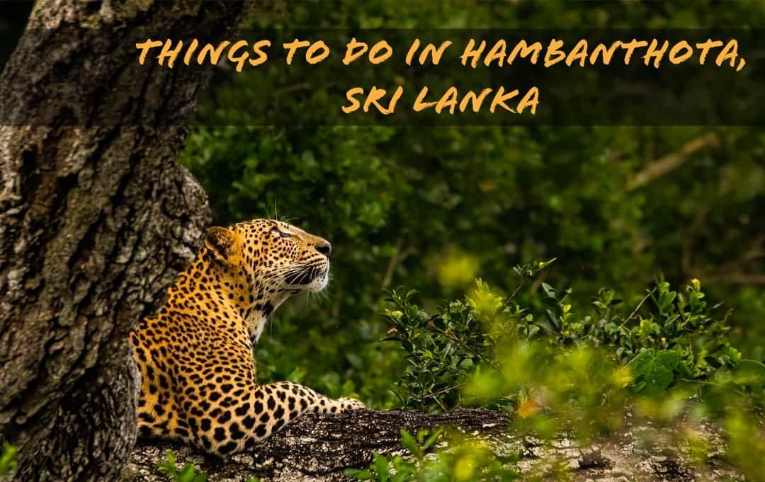 THINGS TO DO IN HAMBANTHOTA, SRI LANKA