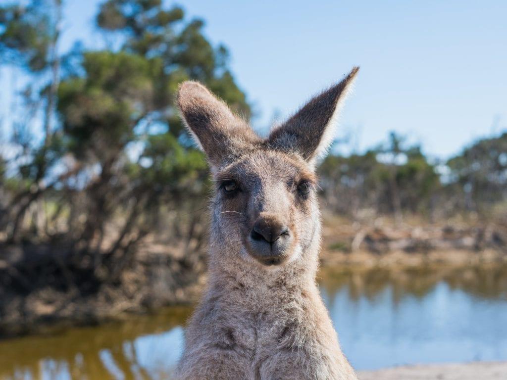 Australien-title-image