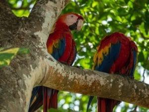 Central America-Costa Rica