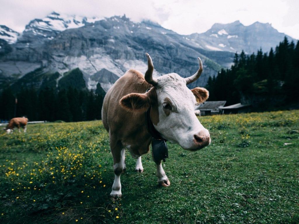 Switzerland-title-image