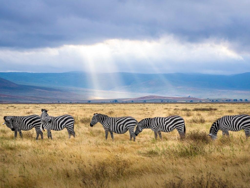Tanzania-title-image